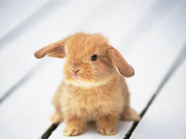 Mơ thấy con thỏ